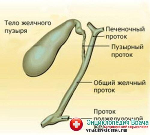 желчегонная система