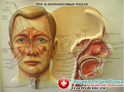 основание черепа перелом фото