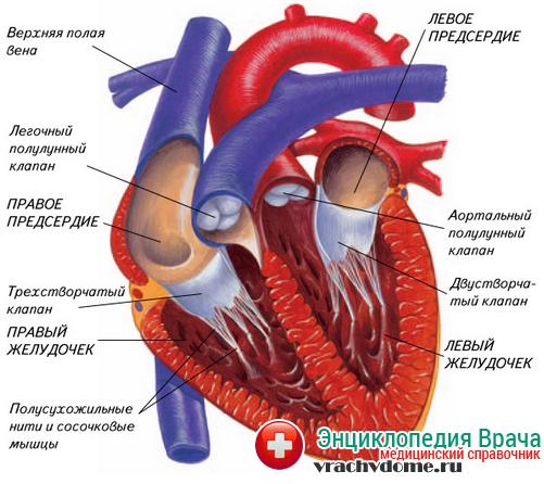Экстрасистолия сердца — симптомы, причины, лечение картинки