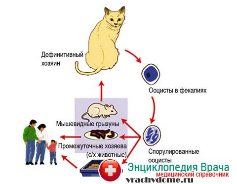 Инфицирование токсоплазмозом - одна из причин патологии