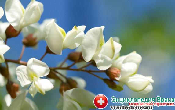 Цветы акации хорошо помогают при болезни и благоприятно воздействую на весь женский организм