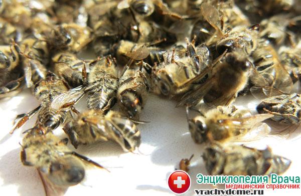 Пчелинный подмор