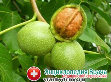 Средства из скорлупы грецких орехов в лечении щитовидки